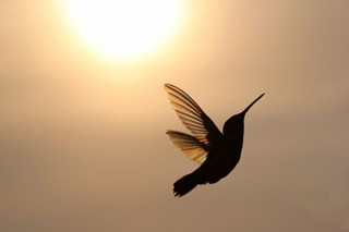 Graceful Hummingbird with Suns