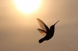 Graceful Hummingbird with Suns