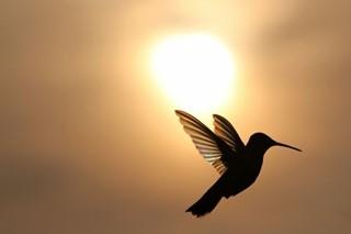 Wings Touching the Sun