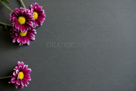 Flowers on Tile (51579)