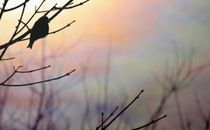 Rainbow Bird Silhouette