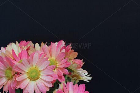 Springtime Mums on Chalkboard (51780)