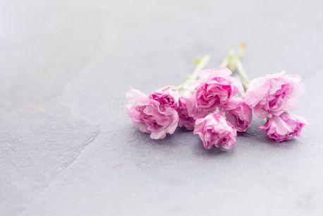 Spring Blossoms (52303)