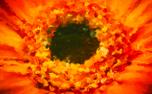 Painted Flowers Loop 4 (52954)