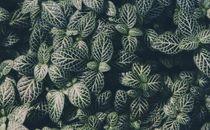 Close Up Plant Texture