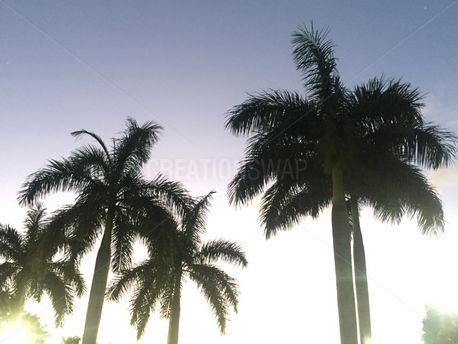 The Palms  (56416)