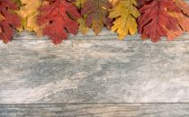 Fall Leaves Top Border