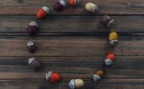Acorns In Circle on Wood