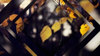 Fall Four