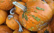 Werid pumpkins