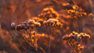 Autumn One