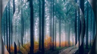 Autumn Four
