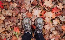Men standing in fall leaves