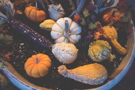 Fall Decorations (59606)
