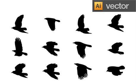Bird in Flight (6320)