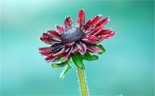 Dynamic Flower