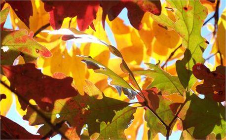 Fall leaves (6787)