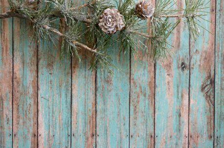 Winter greenery on wood (60041)