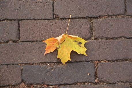 Maple leaf (60107)