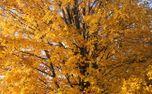 Fall leaves (60142)