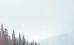 Winter Christmas Loop (61393)
