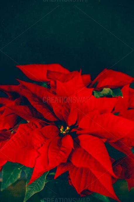 Christmas Traditions 7 (61760)