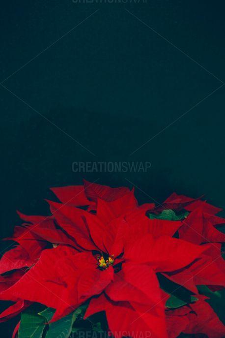 Christmas Traditions 8 (61761)