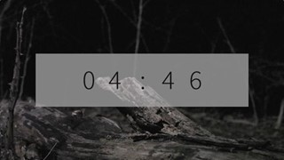 Flashlight Forest Countdown
