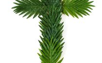 Cross shape of palm fronds
