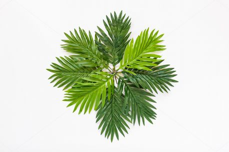 Palm fronds (63727)