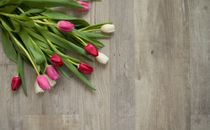 Colorful Tulips Isolated
