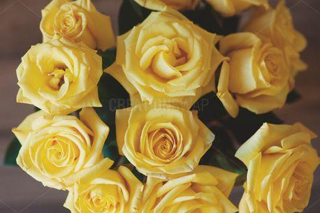 Yellow Roses (64609)
