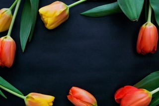 Spring Tulip Flowers on paper