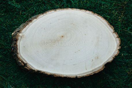 Wood Slice on moss (65152)