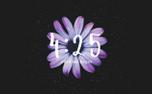 Mom's Day Flower Countdown (66580)