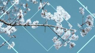 Spring Four