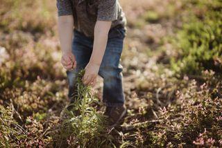 Little boy picking flower