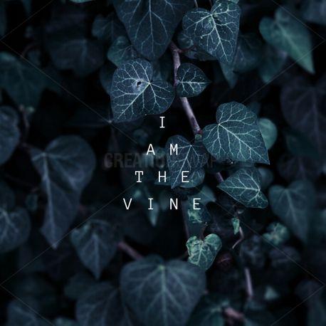 The vine (69077)