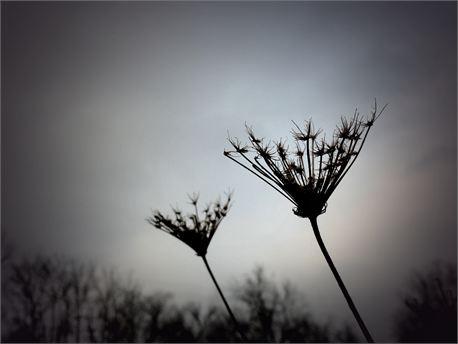 Winter's Beauty (7340)