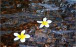 flowers (7686)