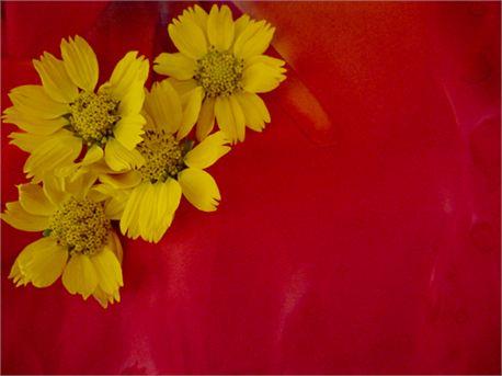 Wild Flower (7737)