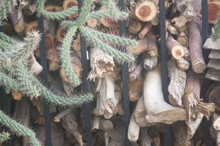 Wood, Cactus, and Iron