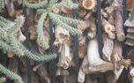 Wood, Cactus, and Iron (70239)