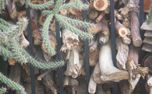 Wood, Cactus, and Iron (70240)