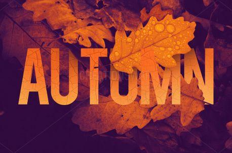 Autumn (71409)