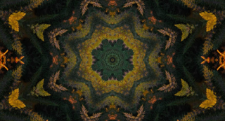 Fall Kaleidoscope Motion Loop