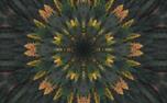 Fall Kaleidoscope Motion Loop (71648)