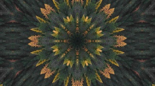 Fall Kaleidoscope Motion Loop