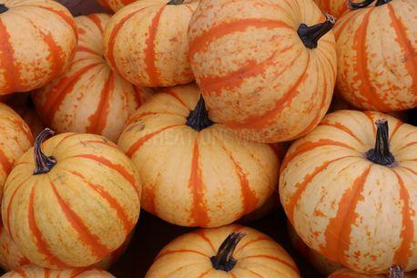 Pumpkins (72212)