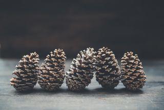 5 Pine Cones